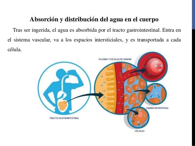 Cure metabolismo glucidos con la naturaleza