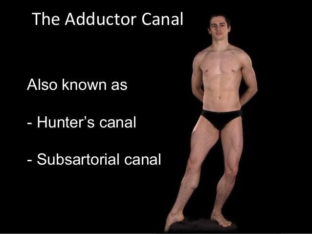 Slideshow: Adductor Canal Slide 2