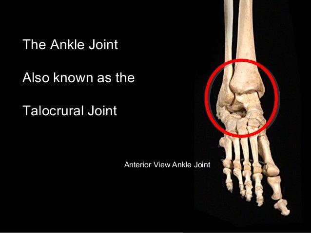 Slideshow: Ankle Joint Slide 2