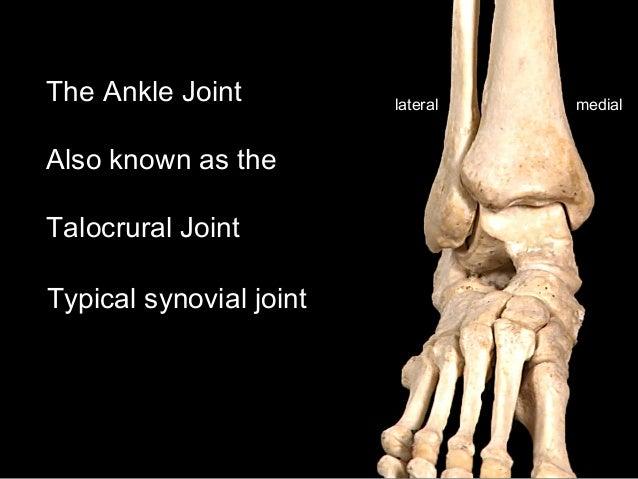Slideshow: Ankle Joint Slide 3