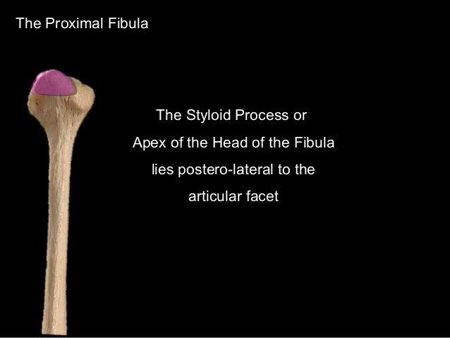 Slideshow: Fibula