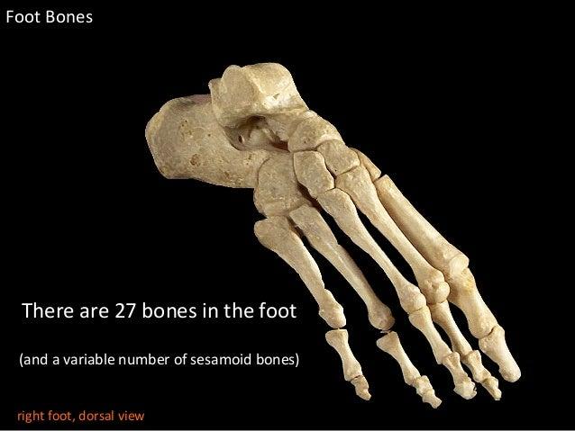 Slideshow Foot Bones