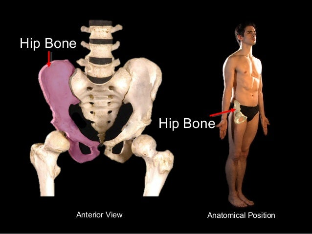 slideshow: hip bone, Human Body