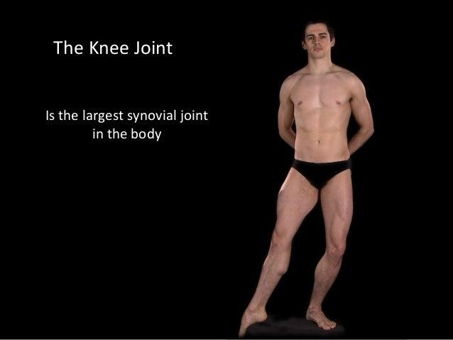 Slideshow: Knee Joint Slide 2