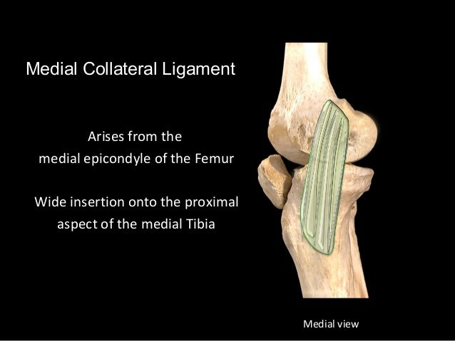 Slideshow knee joint ccuart Image collections