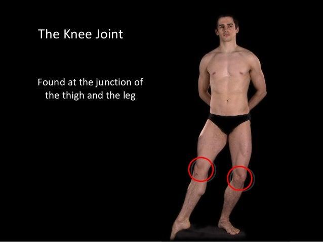 Slideshow: Knee Joint Slide 3