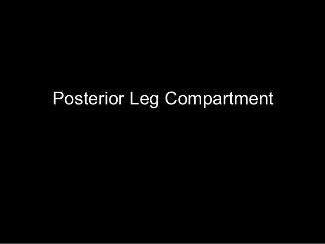 Posterior Leg Compartment