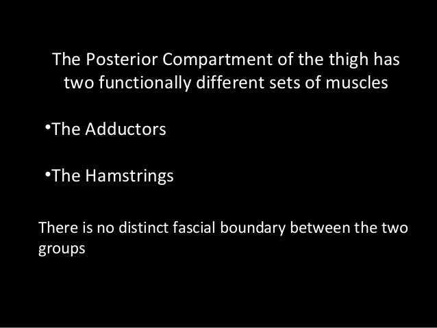 Slideshow: Posterior Thigh Adductors Slide 3