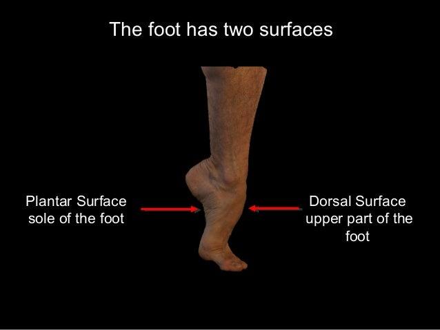 Slideshow: The Foot Slide 2