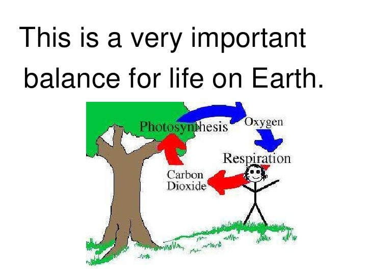 why photosynthesis is important for life Why is photosynthesis important leaving carnivores without food to eat and all life forms wouldn't be on earth photosynthesis happens in the.