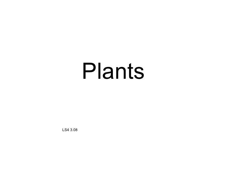 Plants LS4 3.08
