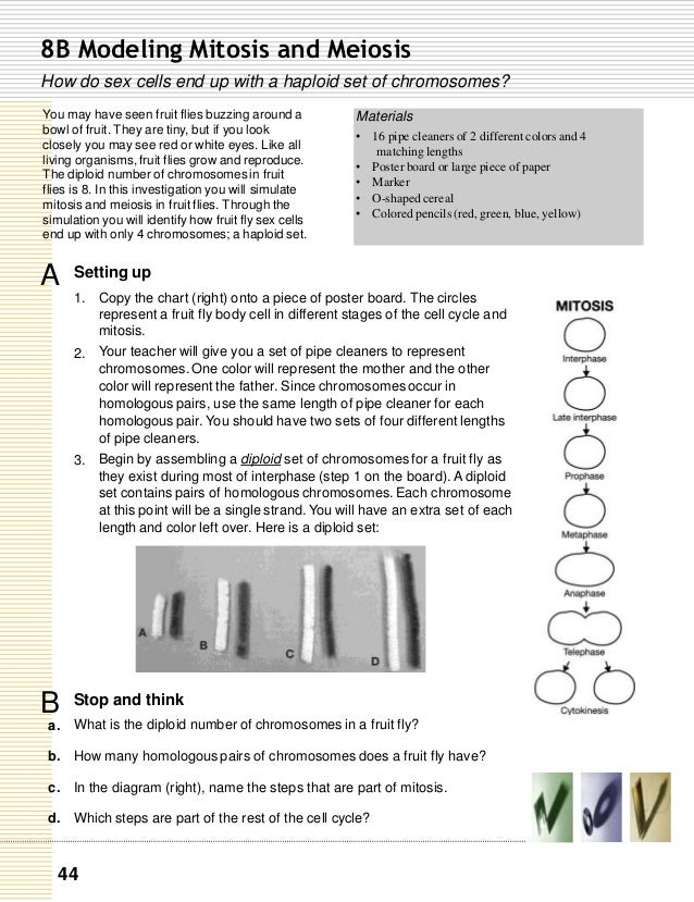 pdf Ein objektorientiertes Modell