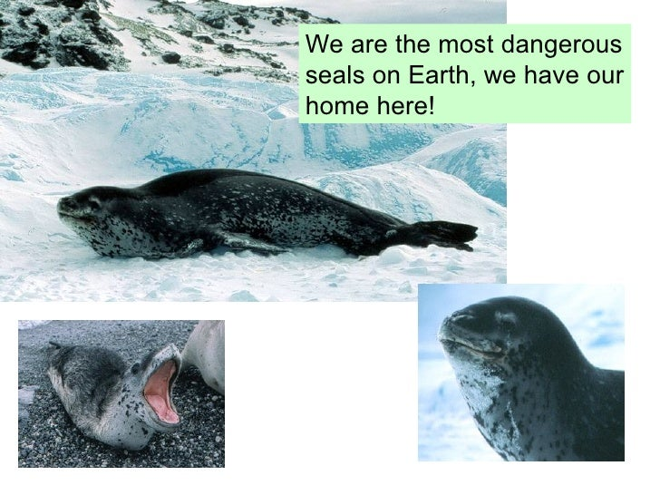 should antarctica be developed Should tourist numbers be limited to protect  antarctica put on ice the galapagos  for which the place was protected a management plan should be developed.