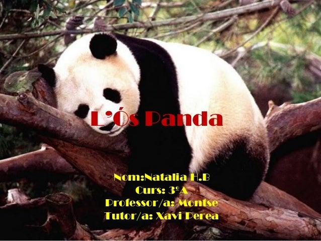 L'Ós Panda Nom:Natalia H.B Curs: 3ºA Professor/a: Montse Tutor/a: Xavi Perea
