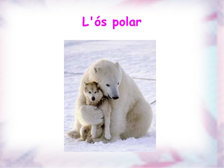 L'ós polar