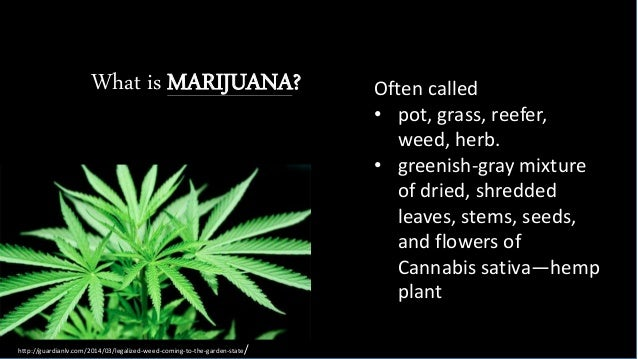 what is marijuana The highest of high holy days for marijuana smokers is coming — national 420  day marijuana day weed day pot day whatever you call it,.