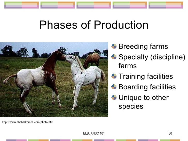an introduction to the analysis of equus Dramaturgical analysis is the idea that people's day-to-day lives can be understood as resembling performers in action on a theater stage as we present ourselves in various situations, we are.