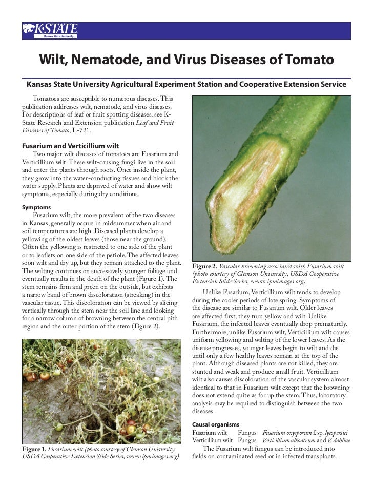 Wilt, Nematode, and Virus Diseases of Tomato Kansas State University Agricultural Experiment Station and Cooperative Exten...