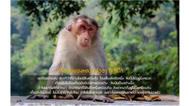 Luangpor chah preaching5