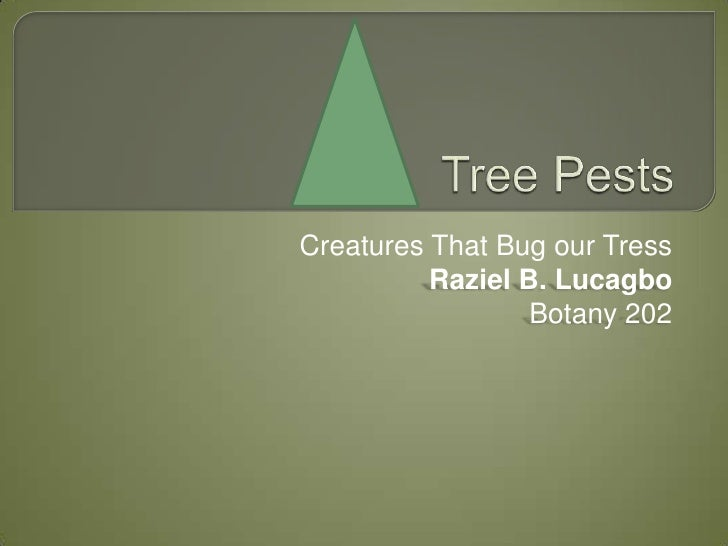 Creatures That Bug our Tress          Raziel B. Lucagbo                  Botany 202