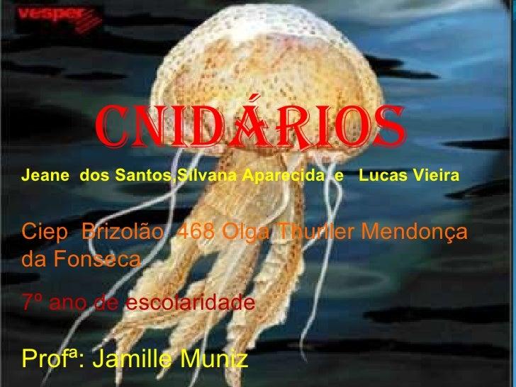 Cnidários Jeane  dos Santos,Silvana Aparecida  e  Lucas Vieira Ciep  Brizolão  468 Olga Thurller Mendonça da Fonseca  . 7º...