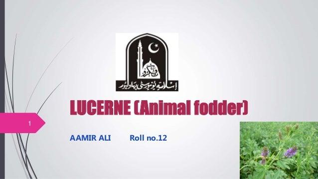 LUCERNE (Animal fodder) AAMIR ALI Roll no.12 1