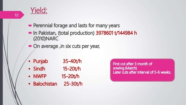 Yield:  Perennial forage and lasts for many years  In Pakistan, (total production) 3978601 t/144984 h (2010)NARC  On av...