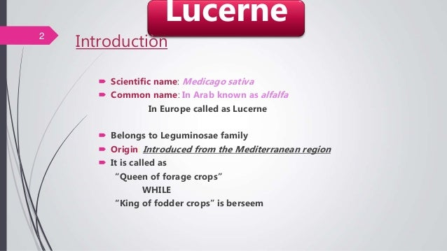 Introduction  Scientific name: Medicago sativa  Common name: In Arab known as alfalfa In Europe called as Lucerne  Belo...