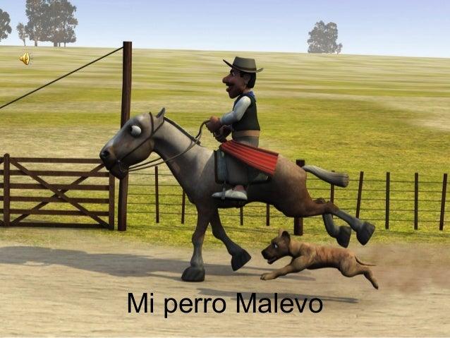Mi perro Malevo