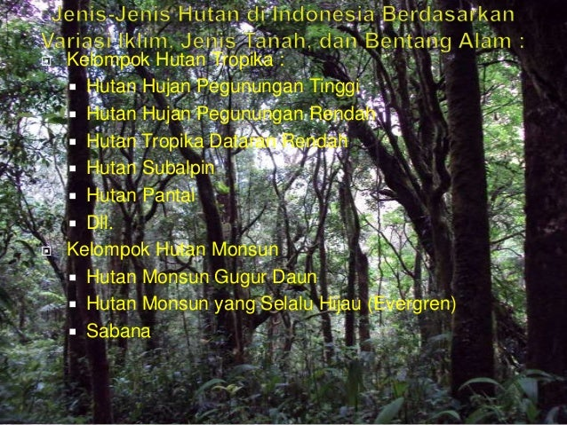 luci andika p alam 4 638 - Jenis Jenis Hutan Di Indonesia
