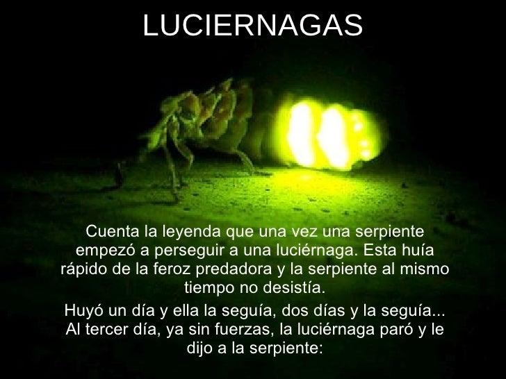 LUCIERNAGAS <ul><li>Cuenta la leyenda que una vez una serpiente empezó a perseguir a una luciérnaga. Esta huía rápido de l...