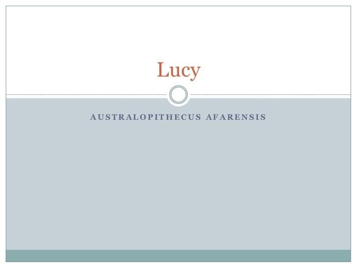 LucyAUSTRALOPITHECUS AFARENSIS