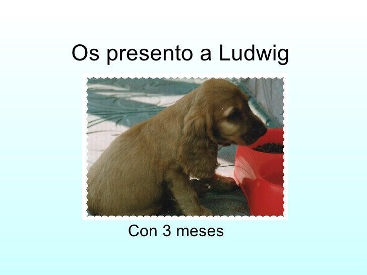 Os presento a Ludwig Con 3 meses
