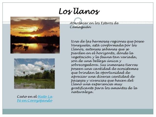 Los llanos                       Atardecer en los Esteros de                       Camaguán                        Una de ...