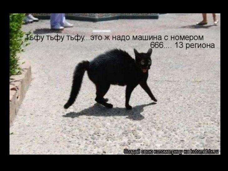 Pets fun-ru