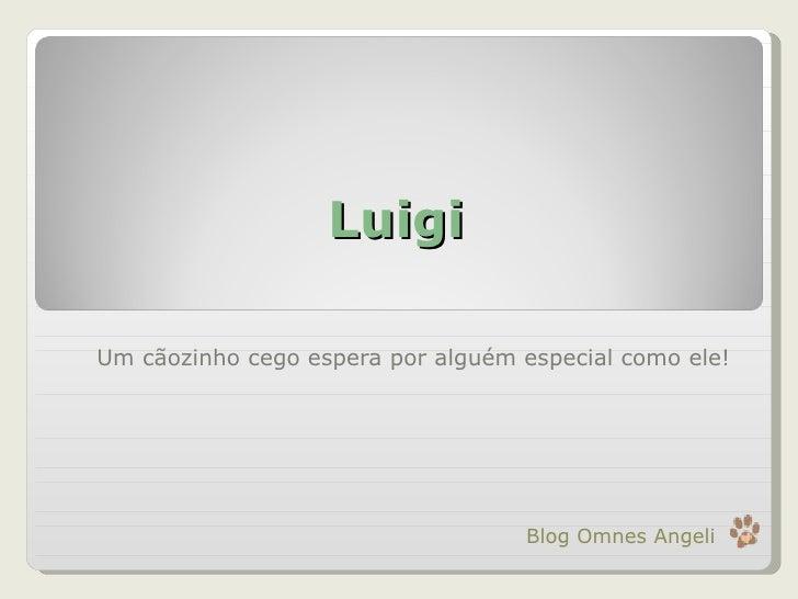 Luigi Um cãozinho cego espera por alguém especial como ele! Blog Omnes Angeli