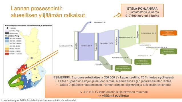Helsinki sesso Ohjelma