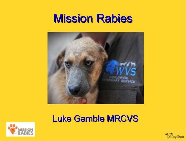 Mission RabiesLuke Gamble MRCVS