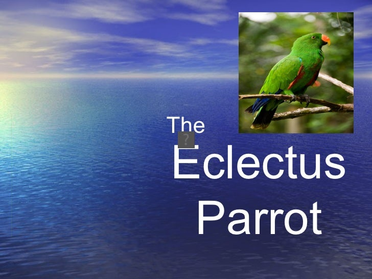TheEclectus Parrot