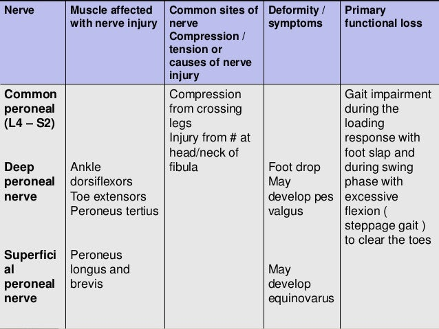 peroneal nerves 10