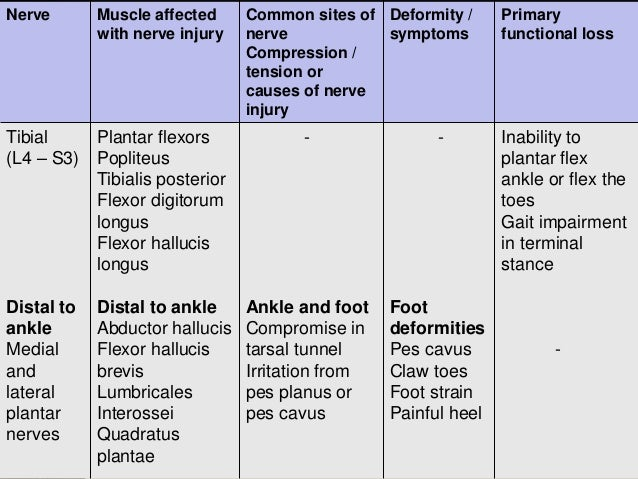 Lumbosacral plexus and sciatica sciaticnerve sciatica 9 introduction the sciatic nerve altavistaventures Images