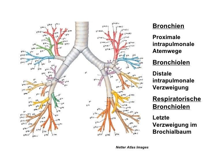 Lungenmanifestation