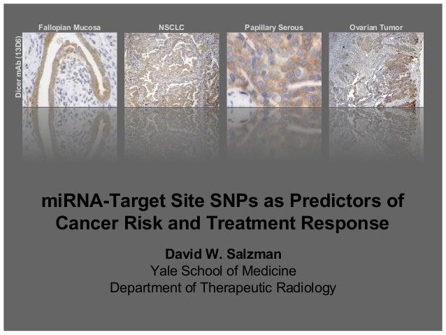 David W. Salzman Yale School of Medicine Department of Therapeutic Radiology Fallopian Mucosa NSCLC Papillary Serous Ovari...
