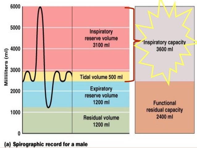 Vital capacity (VCVital capacity (VC(( It is the maximum volumeIt is the maximum volume of air that can beof air that can ...