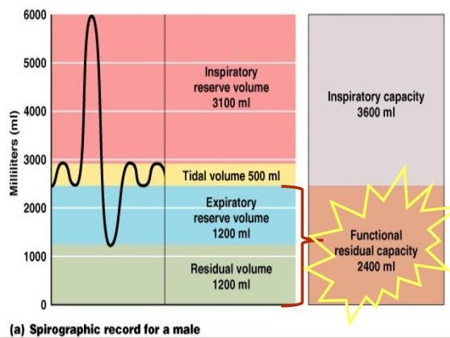 Tidal volume Dead space Tidal volume Inspiratory reserve volume Expiratory reserve volume LUNG VOLUMESLUNG VOLUMES Residua...