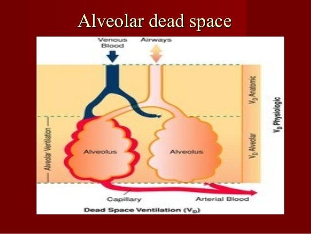 Ventilation: Minute(MRV), Alveolar(VA )& Dead Space(VDS( MRV=VT X breathing frequency= 500ml X12= 6.0 L/min. VA =VA X brea...