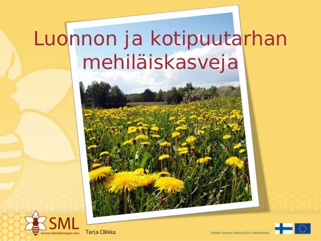 Luonnon ja kotipuutarhan mehiläiskasveja Tarja Ollikka