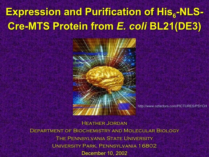 Expression and Purification of His 6 -NLS-Cre-MTS Protein from  E. coli  BL21(DE3) Heather Jordan Department of Biochemist...