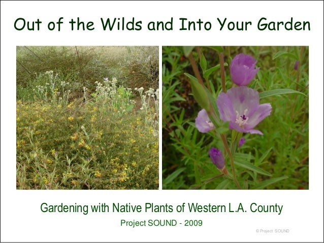 Out of the Wilds and Into Your Garden   Gardening with Native Plants of Western L.A. County                   Project SOUN...