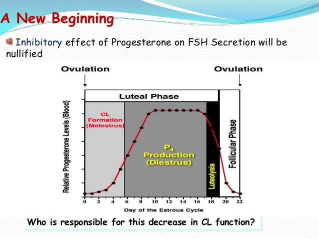A New Beginning Inhibitory effect of Progesterone on FSH Secretion will be nullified  Who is responsible for this decrease...